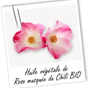 ROSE MUSQUEE DE CHILI