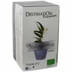 Destination premium, infusion eucalyptus